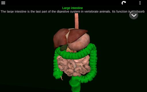Internal Organs in 3D (Anatomy) 2.5 Screenshots 21