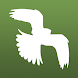 Bird Guide Europe