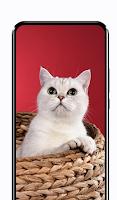 Cute Cat Wallpapers HD Free Kitten Backgrounds 4K