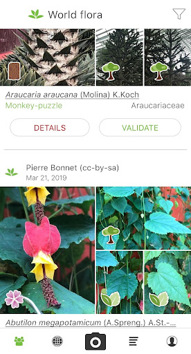 PlantNet Plant Identification  screenshots 1
