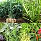 Medicinal plants: natural remedy APK