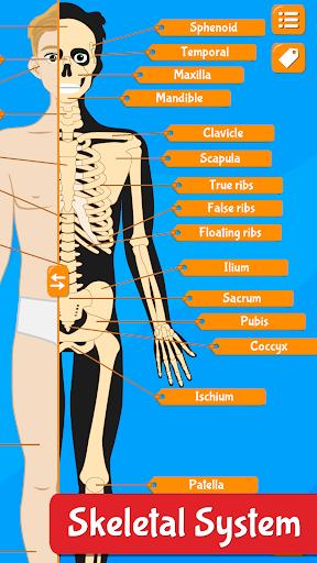 Anatomix - Human Anatomy screenshots 4