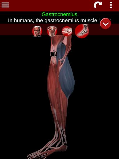 Muscular System 3D (anatomy) 2.0.8 Screenshots 20