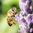 Télécharger Bee Notes APK pour Windows