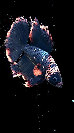 Betta Fish Live Wallpaper FREE 1.4 Screenshots 17