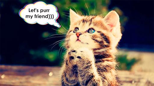 cat translator. cat sounds. meow joke screenshot 1