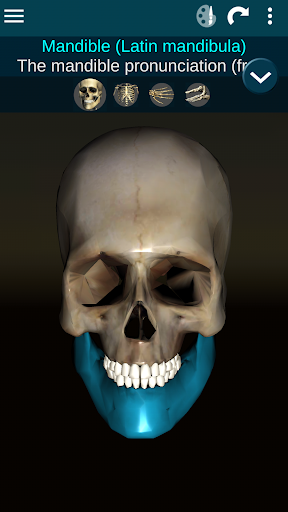 Osseous System in 3D (Anatomy) 2.0.3 Screenshots 1