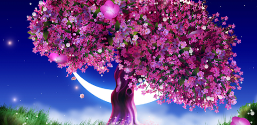 Cherry Blossom Live Wallpaper - Apps on Google Play