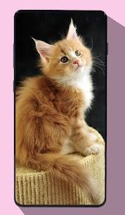 Kitten Wallpapers 4