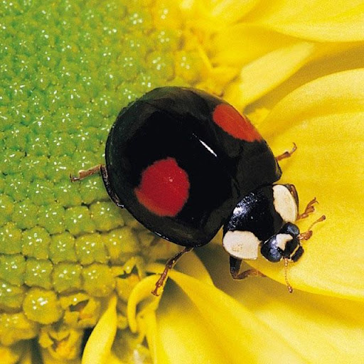 Insects Jigsaw Puzzles apkdebit screenshots 1