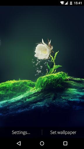Cactus Flower Live Wallpaper 1.6.0 screenshots 2