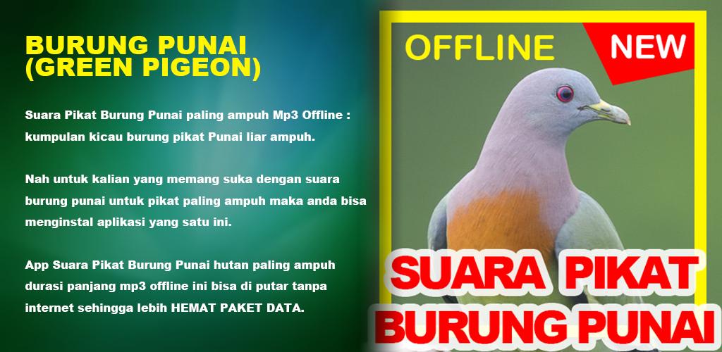 Download Suara Burung Punai Green Pigeon Hd Audio Free For Android Suara Burung Punai Green Pigeon Hd Audio Apk Download Steprimo Com