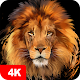 Lion Wallpapers 4K APK