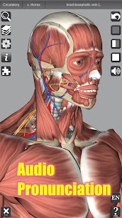 3D Anatomy APK (Paid) 4