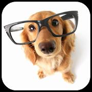 Dog Breeds Encyclopedia