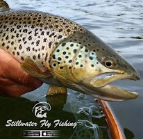 Stillwater Fly Fishing