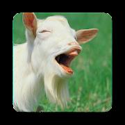 Domestic Goat Sounds ~ Sclip.app