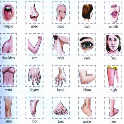 Learn Body Parts in English