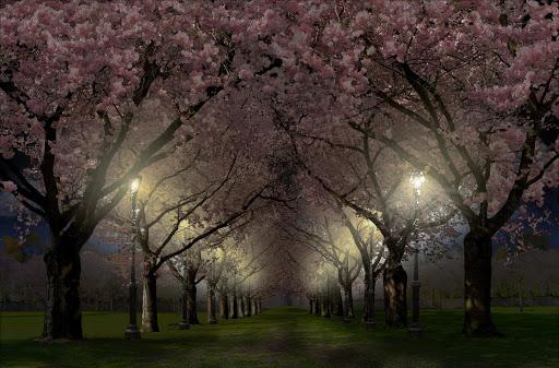 Spring Cherry Blossom Live Wallpaper FREE 1.05 screenshots 2
