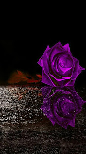 Flowers and Roses Images Wallpaper Gif 4K