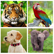 Animals for Kids - Animals Sounds