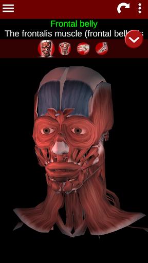 Muscular System 3D (anatomy) 2.0.8 Screenshots 1