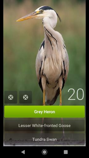 Little Bird Quiz Europe apklade screenshots 2