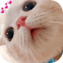 Funny Cat Memes Stickers New WAStickerApps