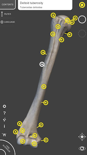 Skeleton   3D Anatomy 2.5.3 Screenshots 14