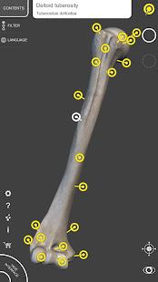 Skeleton | 3D Anatomy 2.5.3 Screenshots 9