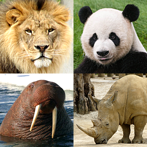 Baixar Animals Quiz - Learn All Mammals, Birds and more! para Android