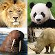 Animais - Adivinha todos os mamíferos e pássaros para PC Windows