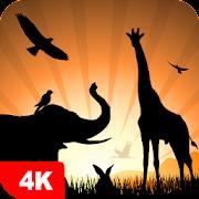 Animal Wallpapers 4K