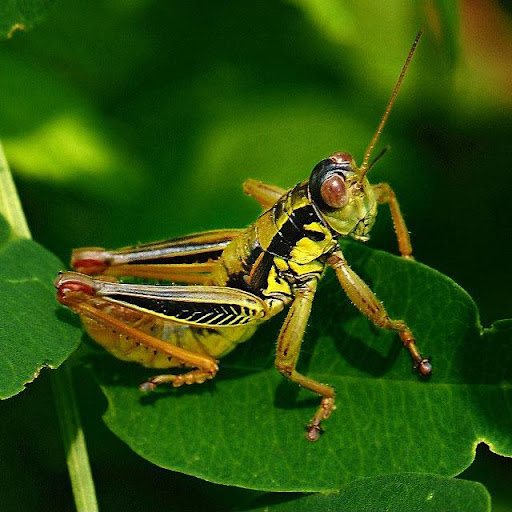 Insects Jigsaw Puzzles apkdebit screenshots 8