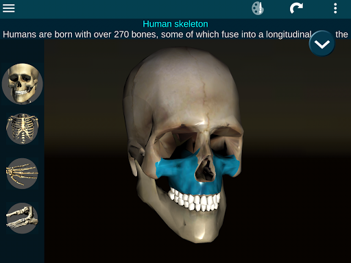 Osseous System in 3D (Anatomy) 2.0.3 Screenshots 17