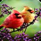 papel de parede de pássaro para PC Windows