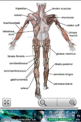 Human Anatomy 1.8 Screenshots 2