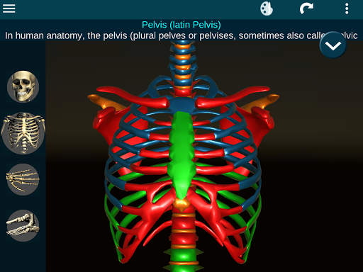Osseous System in 3D (Anatomy) 2.0.3 Screenshots 21