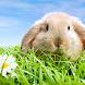 ウサギのライブ壁紙 - Androidアプリ