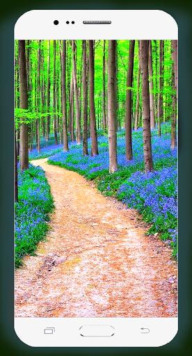 Forest Wallpaper HD Screenshots 5