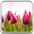 Tulips Live Wallpaper APK