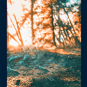 HD Quality background Photo Editing -Free Download