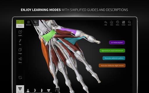 Anatomyka - 3D Human Anatomy Atlas 2.1.5 Screenshots 24