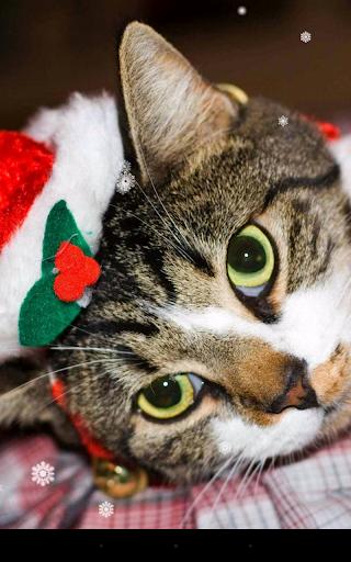 Download Christmas Cat Live Wallpaper Free For Android Christmas Cat Live Wallpaper Apk Download Steprimo Com