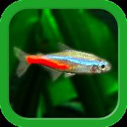 Tropical Fish Tank - Mini Aqua