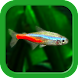 熱帯魚育成「ミニアクア」癒しのアクアリウム体験