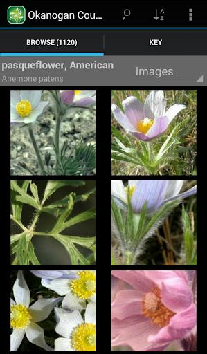 1250 Alberta Wildflowers For PC Windows (7, 8, 10, 10X) & Mac Computer Image Number- 7