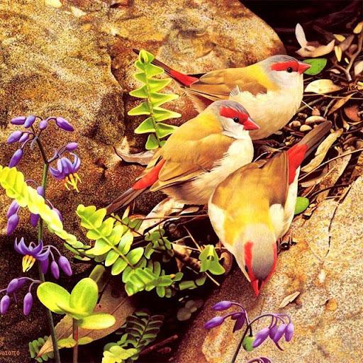 Birds Jigsaw Puzzles  screenshots 1