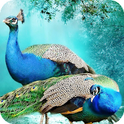 Peacock HD Wallpaper 4K Latest