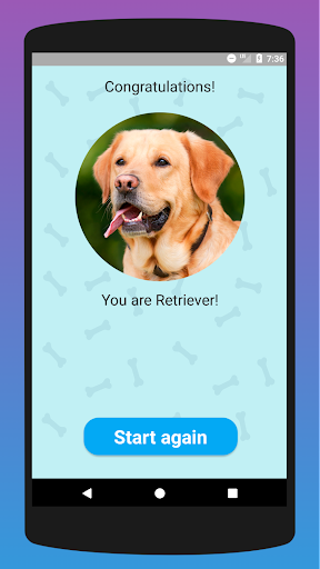 What dog breed are you? Test screenshots 2